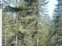 Pindus National Park