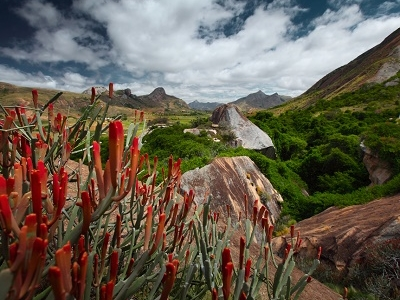 Red Flowers & Rocky Land In Madagascar