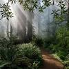 Redwood Nacional y Estatal de Parques