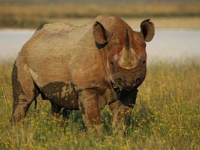 Best of Namibia Safari Photos