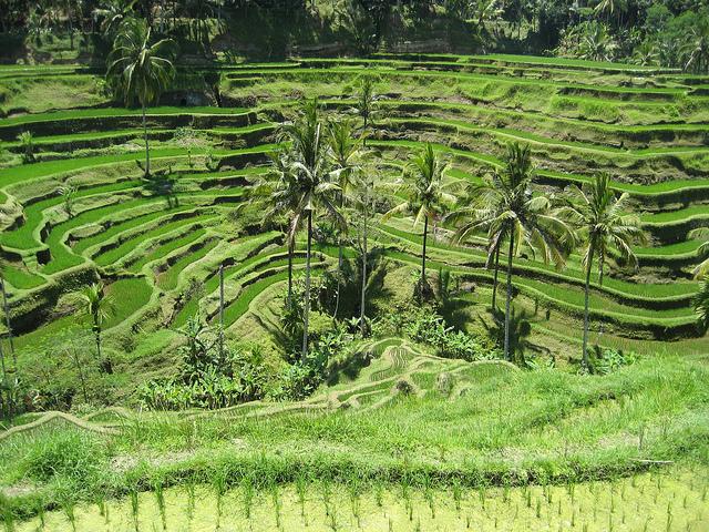 Ubud Day Trip Photos