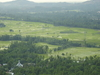 Rice Fields In Verinag