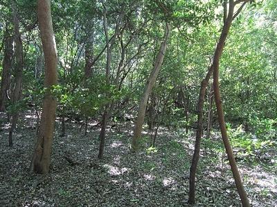Rincon De La Vieja Forest Trail View