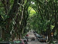 Gonçalo de Carvalho Street