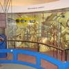Rube Goldberg Machine At RSC Bhopal