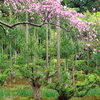 Ryoan-ji Rock Garden