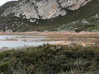 Rocky Cape National Park