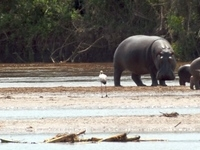 Risizi National Park