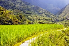 Sagada Rice Fields