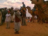 Sam Sand Dunes and Camel Rides
