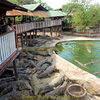 Samut Prakan Granja de Cocodrilos y Zoológico