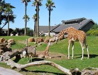 Zoológico de San Francisco