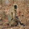 Sanjay-Dubri Tiger Reserve
