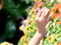 Sentosa Flowers 2012 - Flower Festival