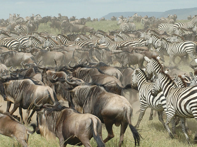 3 Days Serengeti On a Budget Photos