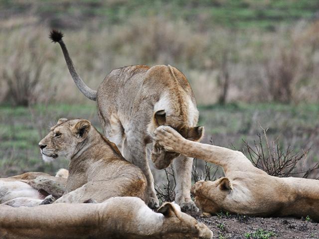 Tanzania Budget Safari Photos
