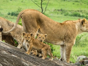 Serengeti Discovery Photos