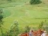 Shan Fields