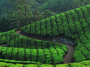 Kerala Summer Tour Fotos