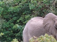 Shimba Hills National Reserve