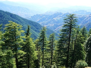 Himachal Delight Package