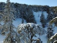Shouf Cedar Reserve