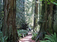 Simpson-Reed Trail