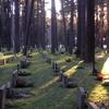 Bosque Iglesia Garden