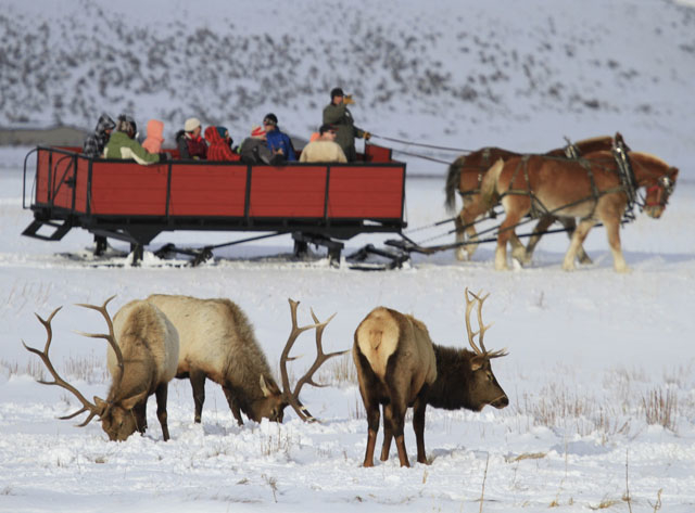 Yellowstone Winter Wonderland Special Photos