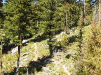 South Fork Gold Fork Trail