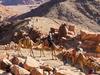 South Sinai Camel Travel In Egypt