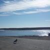 Glace Bay Shoreline