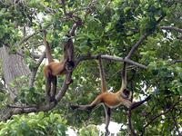 Indio Maíz Biological Reserve