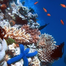Starfish On Coral