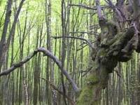 Estepa Reserva Natural