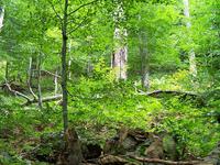 Cárpatos Primeval Beech Forests
