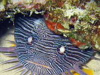 Arrecifes de Cozumel National Park