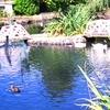 Sunny Walter Pillings Pond