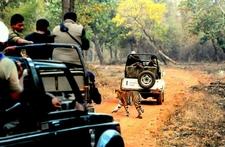 Gypsy Jungle Safari Trips