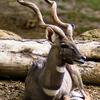 Río Tana Primate Reserve