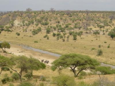 Tarangire River In The National Park