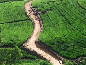 Tea Trails of Ceylon Tour Photos