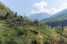 Terraces Around Manaslu Circuit - Nepal Himalayas