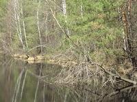 The Broduszurki Nature Reserve