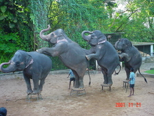 The Elephant Performances In Dehiwala Zoo.