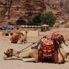 The Petra Archaeological Park Jordan