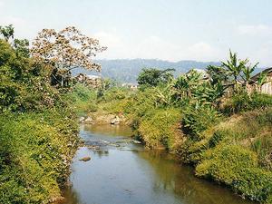 Andasibe National Park Photos