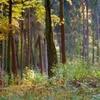 The Uroczysko Dzierzbia Preserve