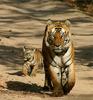 Pakke Wildlife Sanctuary