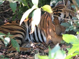Pench National Park Safari Package Photos